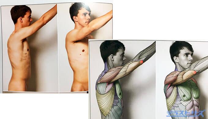 実写からの筋肉図1