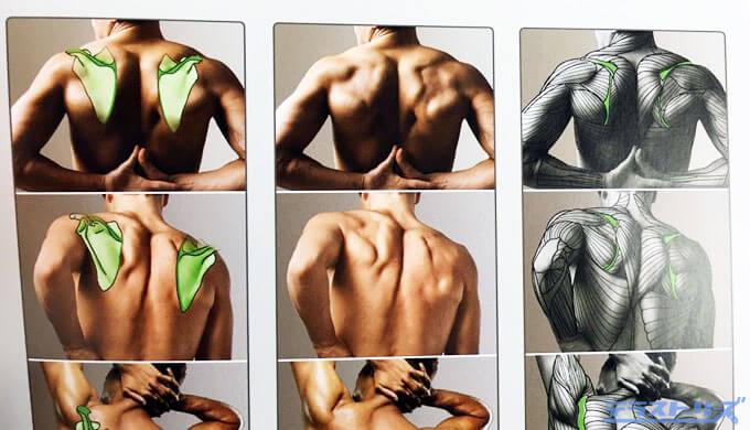 背中の筋肉