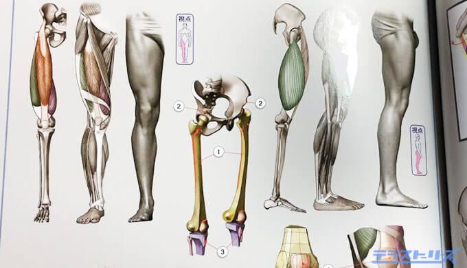 脚の人体構造