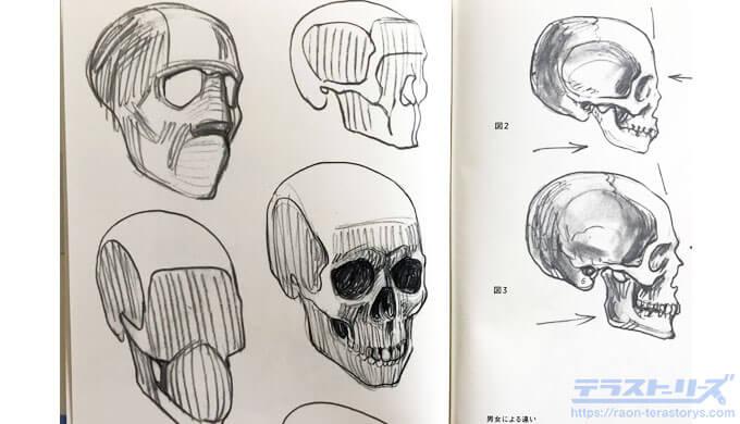 モルフォ人体デッサン32、33ページ