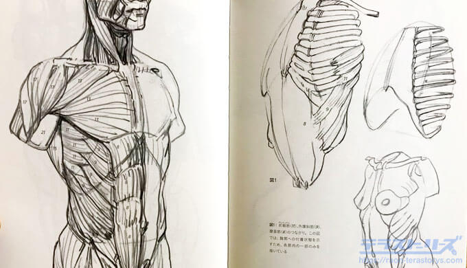 モルフォ人体デッサン66,67ページ