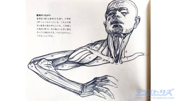 モルフォ人体デッサン96ページ