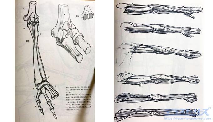 モルフォ人体デッサン139、175ページ