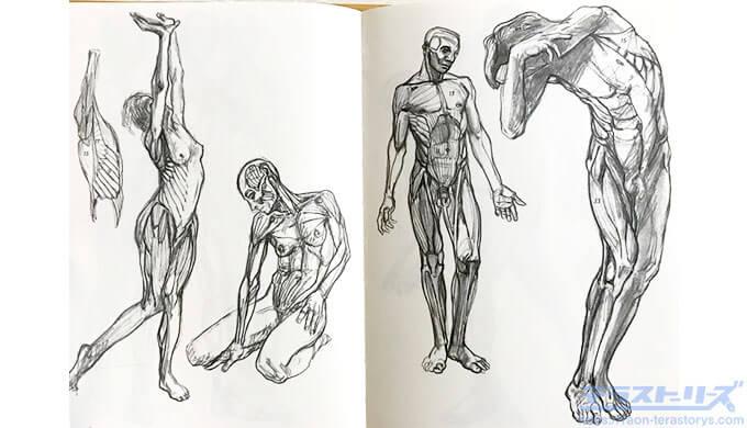 モルフォ人体デッサン282,283ページ