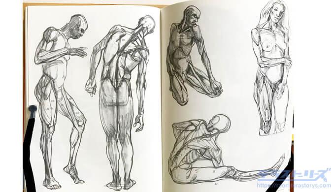 モルフォ人体デッサン294,295ページ